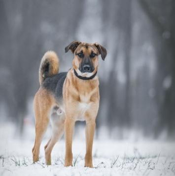 Дин - Собаки в добрые руки