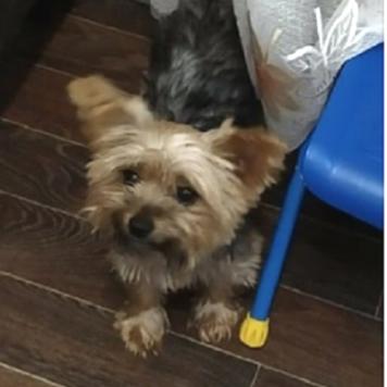 Дуся - Пропавшие собаки