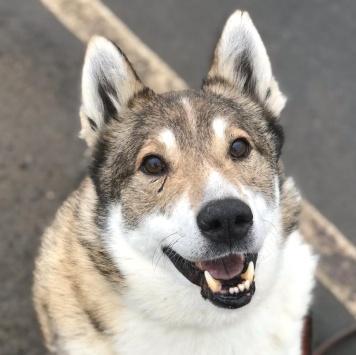 Север - Собаки в добрые руки