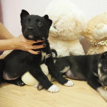 Дина Арина - Найденные собаки
