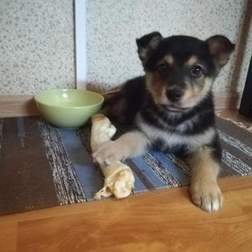 Шелли - Собаки в добрые руки