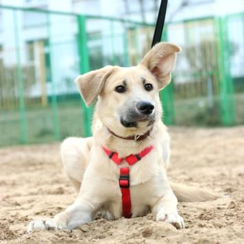 Ваня - Собаки в добрые руки
