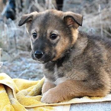 Кэр - Собаки в добрые руки