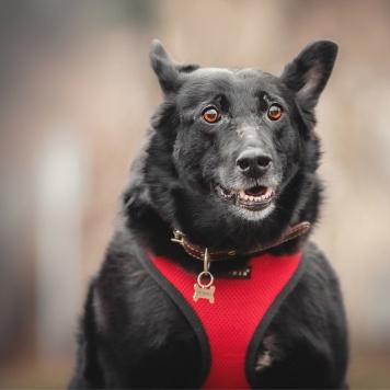 Ариша - Собаки в добрые руки
