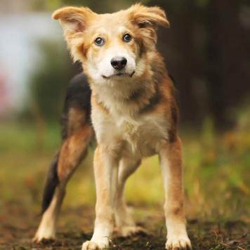 Кай - Собаки в добрые руки