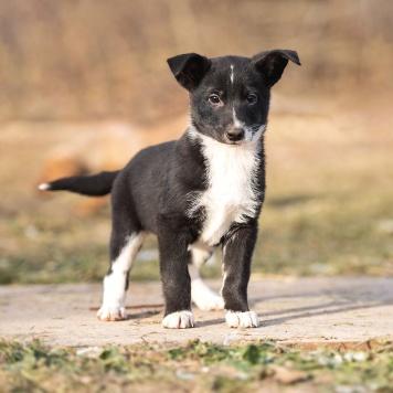 Тося - Собаки в добрые руки