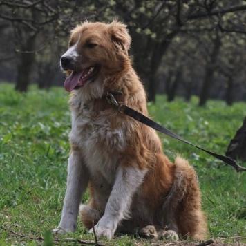 Долли - Собаки в добрые руки