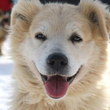 Пушкин - Собаки в добрые руки
