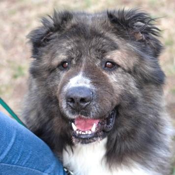 Тимофей - Собаки в добрые руки