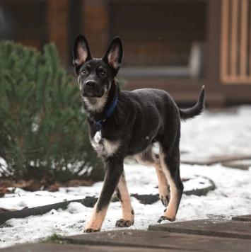 Дёма - Собаки в добрые руки