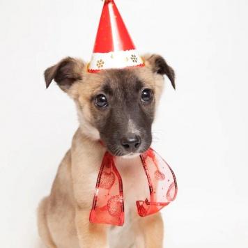 Брауни - Собаки в добрые руки