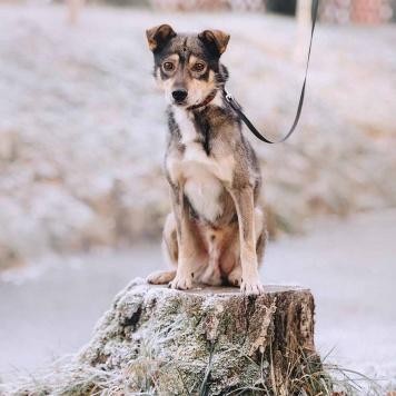 Барли - Собаки в добрые руки
