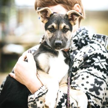 Джеки - Собаки в добрые руки