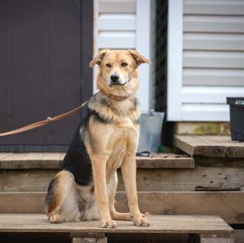 Джуди - Собаки в добрые руки
