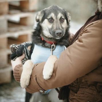 Амели - Собаки в добрые руки