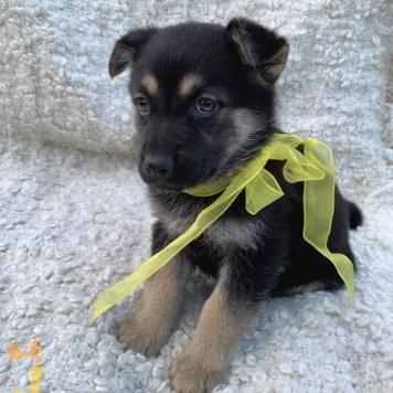 Найденыш - Собаки в добрые руки