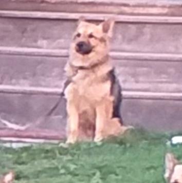 Тима или Ржавый - Пропавшие собаки