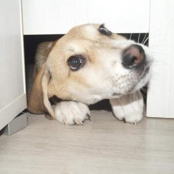 Юккена - Собаки в добрые руки