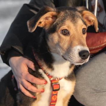 Таисия - Собаки в добрые руки