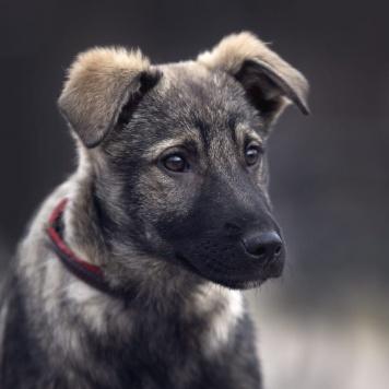 Юха - Собаки в добрые руки