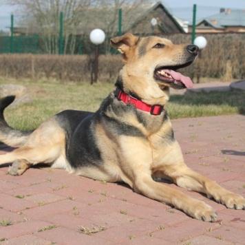 Юстас - Собаки в добрые руки