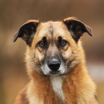 Йося - Собаки в добрые руки