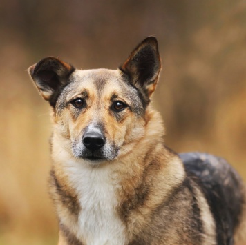 Нюра - Собаки в добрые руки