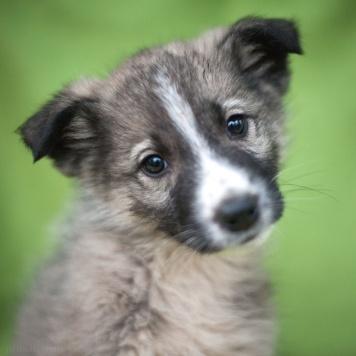 Лэни - Собаки в добрые руки
