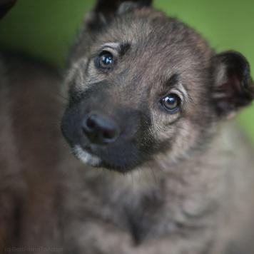 Линт - Собаки в добрые руки