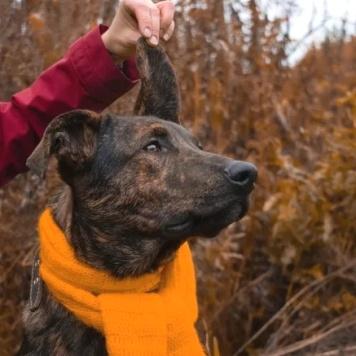 Лайс - Собаки в добрые руки