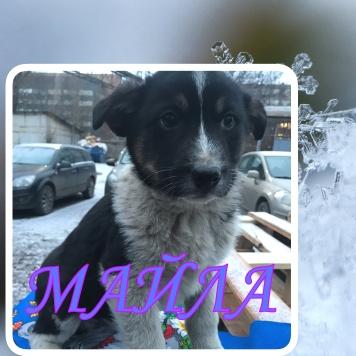 Майла - Собаки в добрые руки