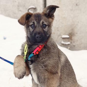 Гоша и Жуля - Собаки в добрые руки