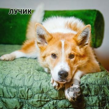 Лучик - Собаки в добрые руки