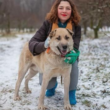 Митяй - Собаки в добрые руки