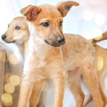 Эльза и Люся - Собаки в добрые руки