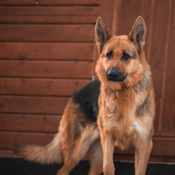 Германика - Собаки в добрые руки
