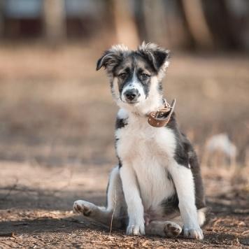 Дарик - Собаки в добрые руки