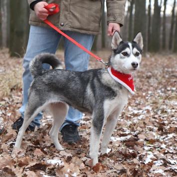 Дымка - Собаки в добрые руки