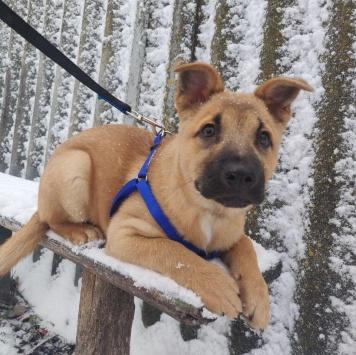 Пузя - Собаки в добрые руки
