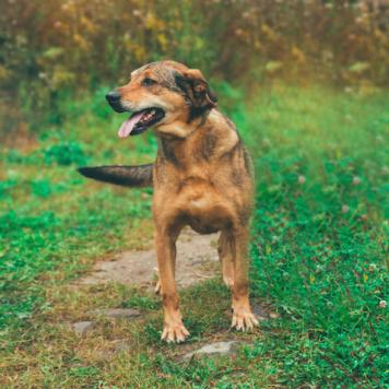 Андора - Собаки в добрые руки