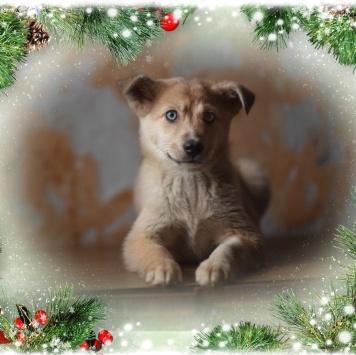 Шанель - Собаки в добрые руки