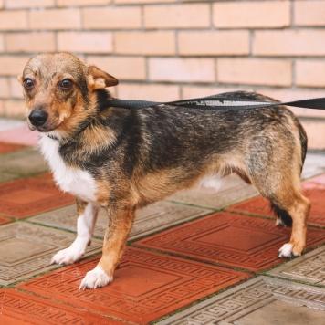 Снупи - Собаки в добрые руки