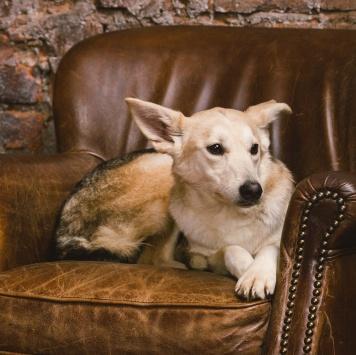 Цуца - Собаки в добрые руки