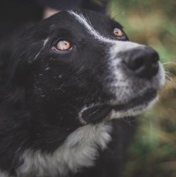 Бим - Собаки в добрые руки