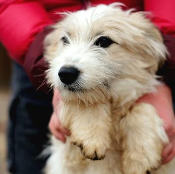 Алекса - Собаки в добрые руки