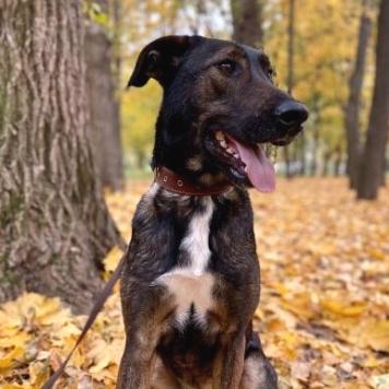 Дунай - Собаки в добрые руки