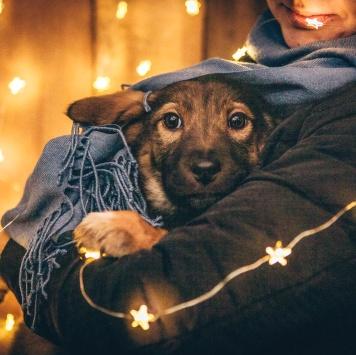 Брют - Собаки в добрые руки