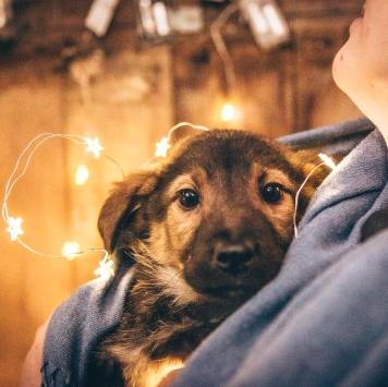 Боско - Собаки в добрые руки