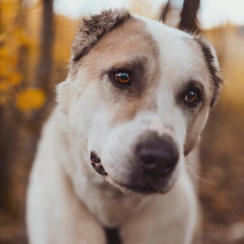 Батур - Собаки в добрые руки