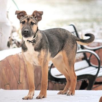 Дези - Собаки в добрые руки